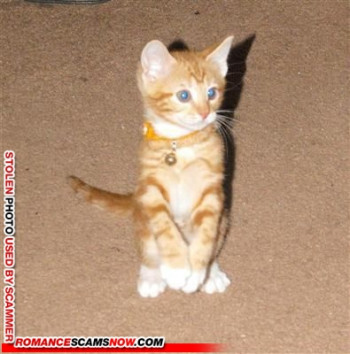 cynthia_fems101@yahoo.com - smart using a kitten!