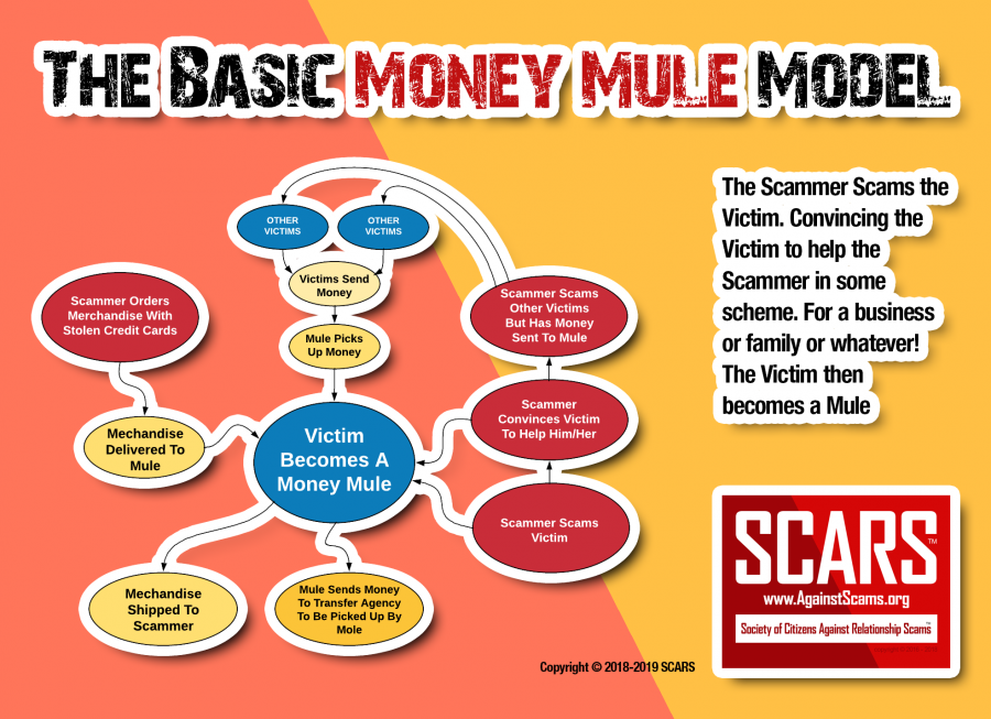 The Basic Money Mule Model!