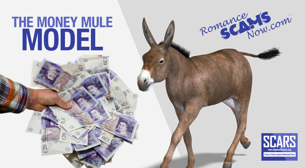 RSN™ Special Report: The Basic Money Mule Model! 1