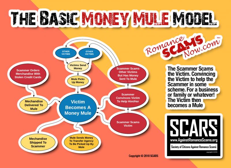 The Money Mule Model