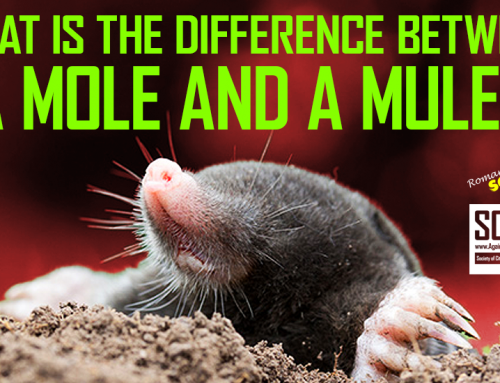 RSN™ Insight: The Difference Between A Scammer's MULE and a MOLE