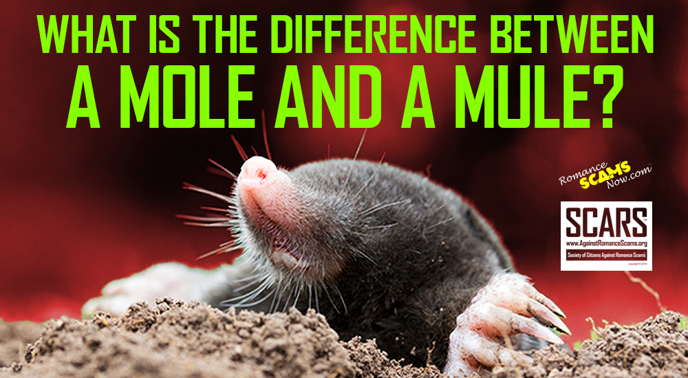 RSN™ Insight: The Difference Between A Scammer's MULE and a MOLE 1