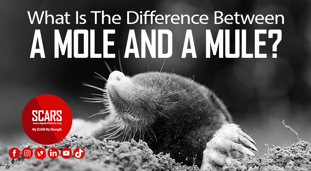 What-is-the-difference-between-a-Mole-and-a-Mule-2021