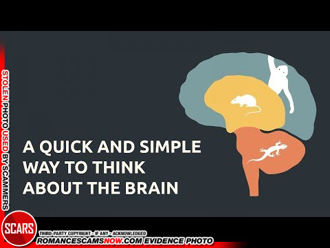 A Quick and Simple Way to Think About the Brain [VIDEO]